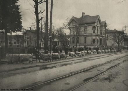Training goats on Morrison St., circa 1904 : A2004-002.139